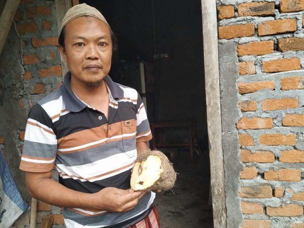 Antisipasi Rawan Pangan, Desa Ini Mulai Siapkan Cadangan Makanan Pengganti Beras