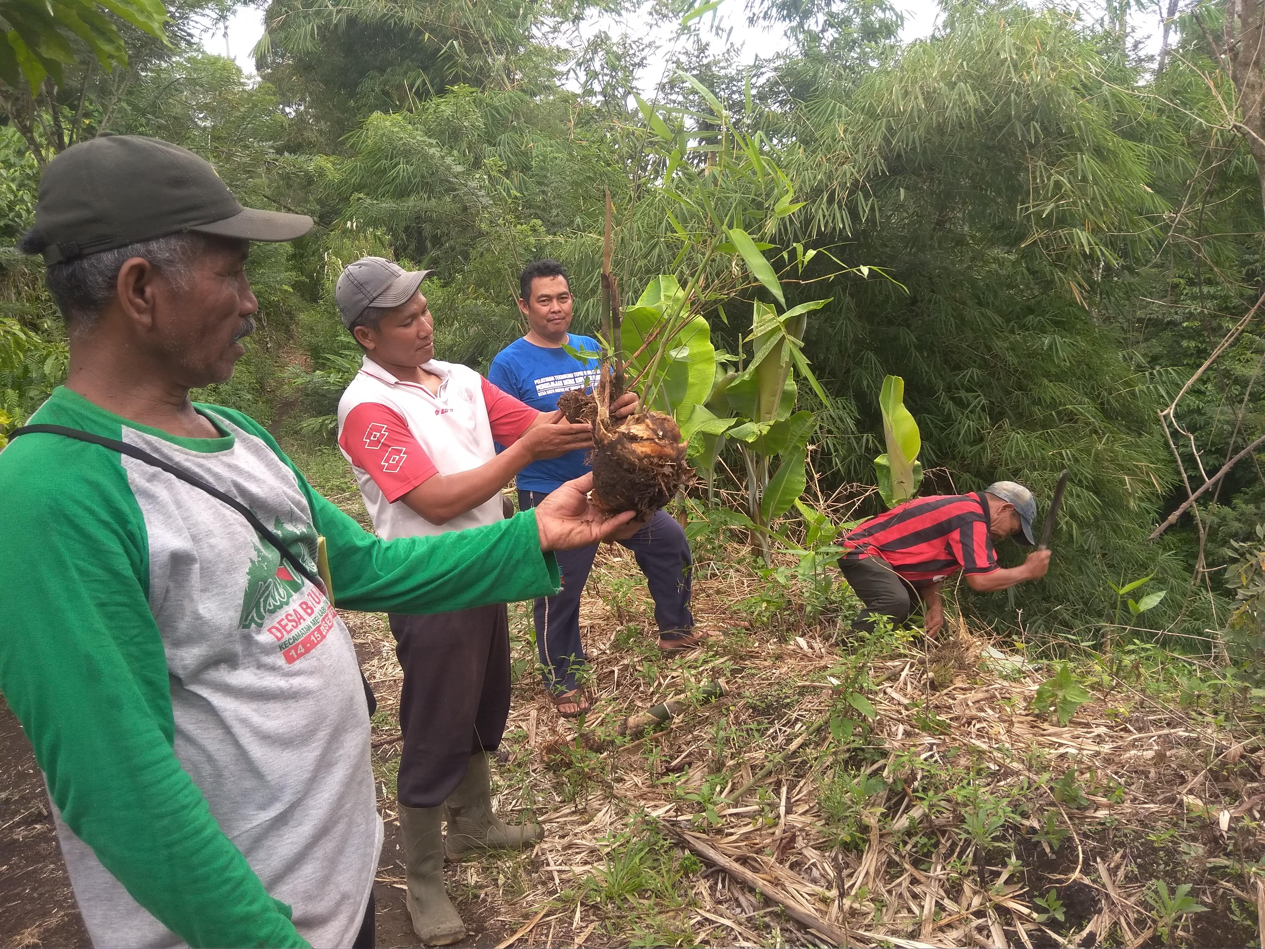 Hingga 2025 Batu Ampar Targetkan 10.000 Batang Bambu