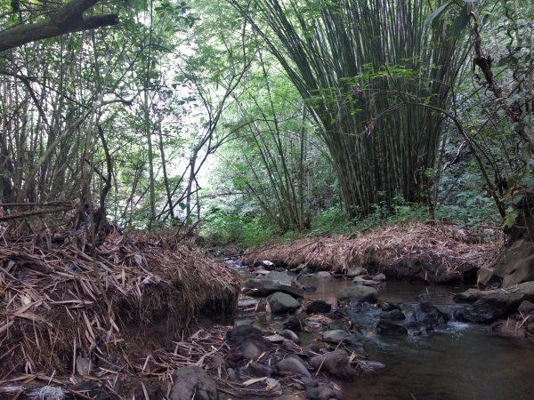 Aksi Tanam Bambu untuk Peringatan Hari Air Dunia